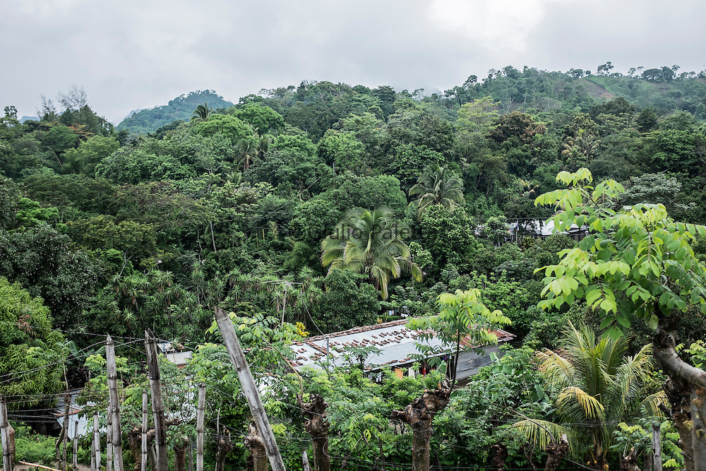 Forest area in the hills just outside San Salvador, where most maquila workers live in very difficult and poor conditions