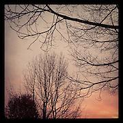 2011, Richard Walker, Seattle, WA, USA, Instagram, Apple, phone, iPhone, app, trees, winter, season, December, dark, sunset, twilight, evening, pink, weather, view,