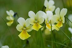 Bloemen en bloemplanten, plants and flowers