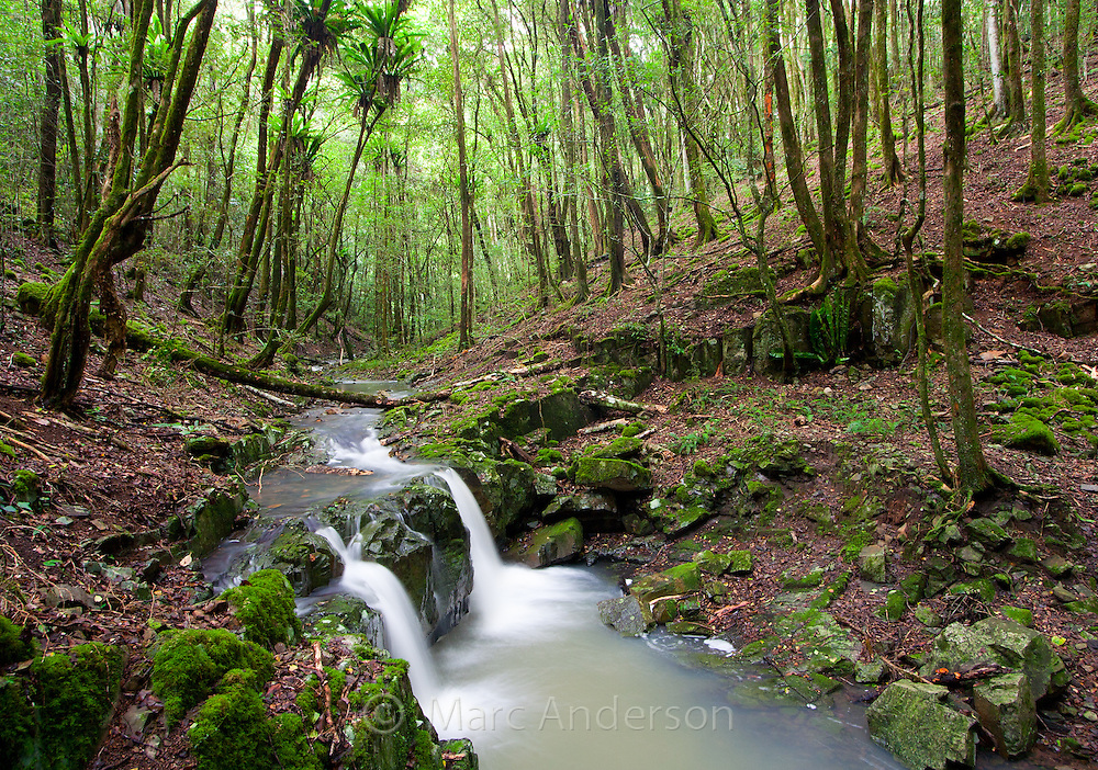 A beautiful rainforest stream in Barrington Tops National Park, Australia