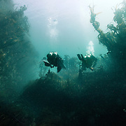 Two divers leaving a kelpy gully around Sandray in the Outer Hebrides.