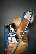 S@#$%head, four months, in her cart. Owned by Suzie Ragans.