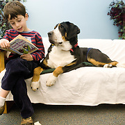 "Vet school students take their animals to the Grafton Library's reading enrichment program, ""R.E.A.D.,"" in which children read to animals. (Melody Ko/Tufts University)"
