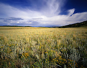 AA03487-02...COLORADO - Ancient Florissant Lake which is now a grassland in the Florissant Fossil Beds National Monument.