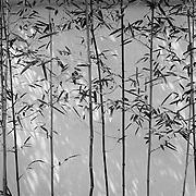 "松風荘 - Shofuso - ""Pine Breeze Villa"""