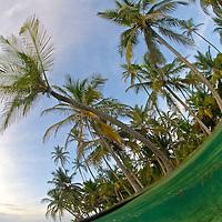 Palm trees and ocean. San Blas Islands
