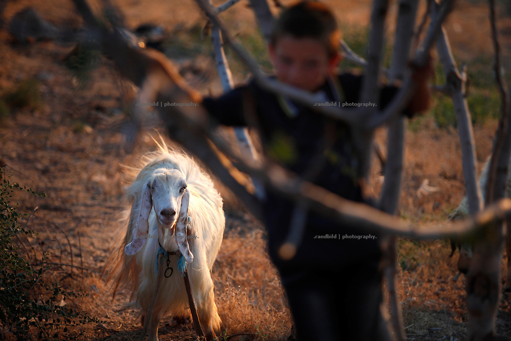 A boy climbs a bush on dryed out soil where some sheeps graze around.<br /> _ _ _ <br /> Idlib Interim - Challenging life without central government in the village of Koreen (Idlib Province, Syria)<br /> Koreen joint the syrian uprisung to ouster president Bashar al-Assad at a very early stage in 2011. It has been scene of Army attacks and heavy shelling since 2012. In the course of the fightings the village of a few thousend inhabitants was almost abandoned as barrel bomb campaings commited by the regime pounded Koreen. But since regime forces retreated to few bases remaining in Idlib province people returned home to establish a new and almost unregulated economic, social and community life. The regimes power has no affect and can&acute;t reach them anymore. On the other hand a new government isn&acute;t established yet and not in sight at all. Koreen is free to make its way.