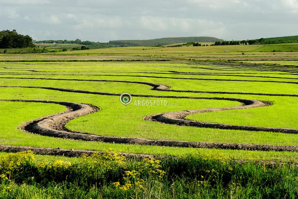 Lavoura de arroz na cidade de Eldorado do Sul, RS, Brasil/ Rice crops in Eldorado do Sul city, RS, Brazil