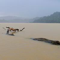 Gatun Lake, Panama Canal, Panama City, Panama, Central America