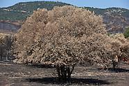 Fires in Corsica FC161A