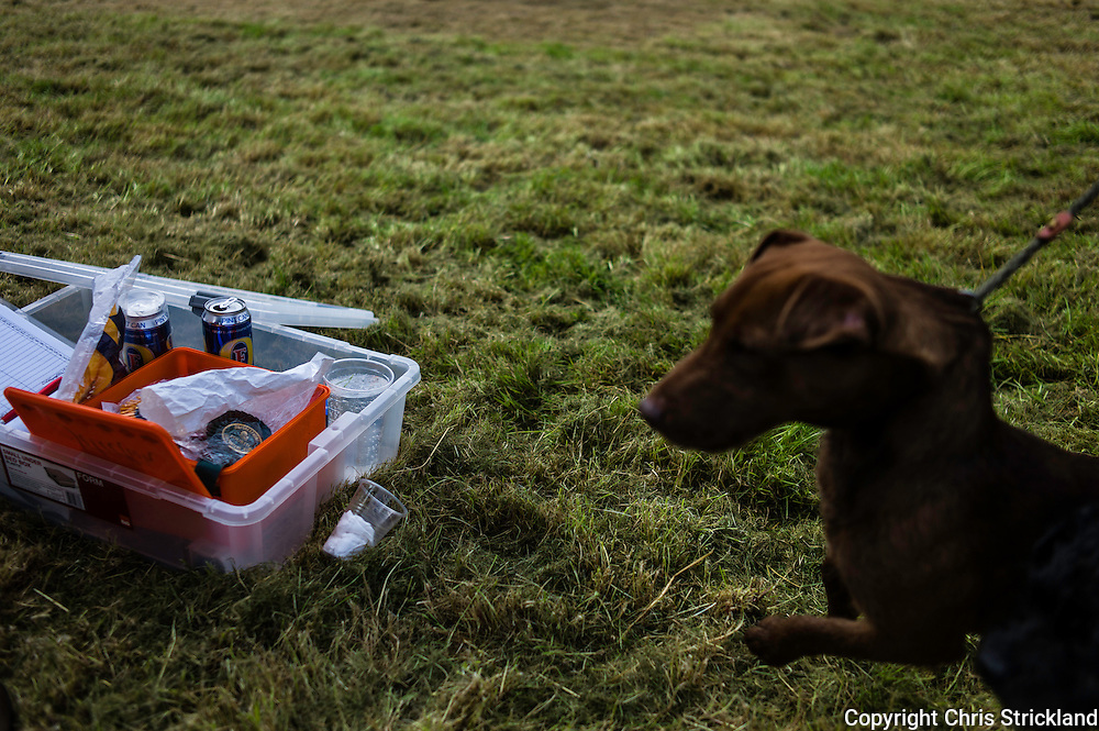 The Wells, Bedrule, Bonchester Bridge, Hawick, UK. 26th July 2015. A red fell terrier looks inqusitively at its surroundings next to the essentials of lager and lemonade at the Jedforest Hunt Hound Terrier & Lurcher show.