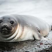 Seals / Antarctica | Photos
