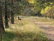 Park Bench along Trail