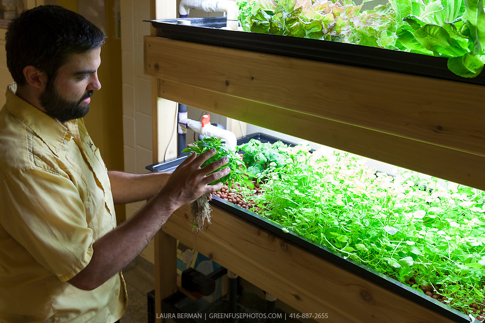 Aquaponic Growing System Greenfuse Photos Garden Farm Food Photography