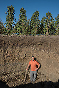Hole showing depth of vine roots and rocks, Cayuse vineyards, Walla Walla