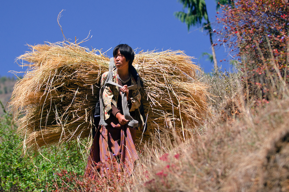 A woman carrying a huge load of hay to stock up for the winter near Paro, Bhutan.