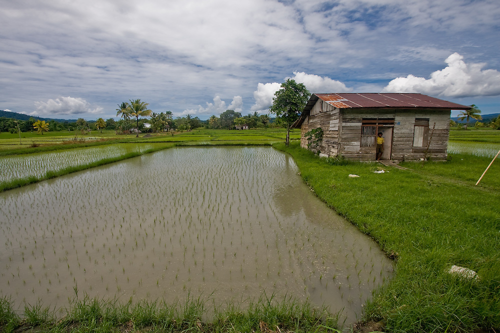Rice paddies and house in Central Sulawesi
