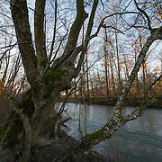 Lower Dungeness River near the mouth, at a crisp clear winter sunset.