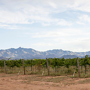 Pillsbury Wines created by Sam Pillsbury with grapes grown in Cochise County outside of Willcox, Arizona. Pillsbury wine can be found throughout Arizona, with its tasting room located in Cottonwood.