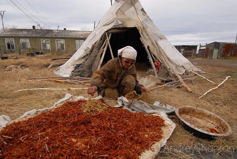 Tanning of reindeer skins in Achayvayam village.The Kamchatka peninsula, Russia