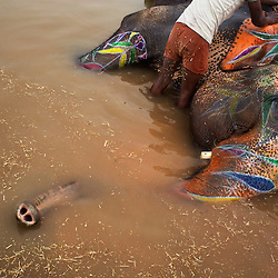 Elephant Care in India