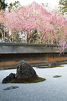 Ryoanji Garden and Sakura - one of the world's best known gardens. The main attraction is its rock garden, the most renowned of its kind in Japan. The simple Zen garden consist of nothing but rocks and neatly raked gravel. Though the meaning of the garden's arrangement is unknown and up to each visitor's interpretation it is said that if you can see all of the 15 stones at one time you have reached enlightenment.