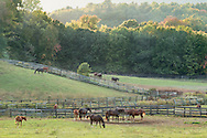 Otisville, New York - Thoroughbred horses graze in a field at Hidden Lake Farm on Oct. 4, 2016.