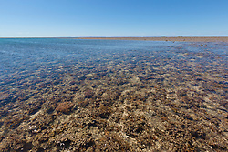 Algae, corals and sponges in the shallows of Montgomery Reef