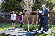Quick Selection   Tree Planting BBG ~ Japanese Garden
