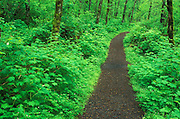 Image of a nature trail in the Columbia River Gorge, Oregon, Pacific Northwest
