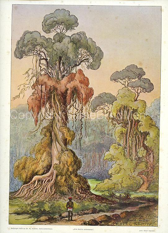 Haeckel. Horton Plains. 1882.