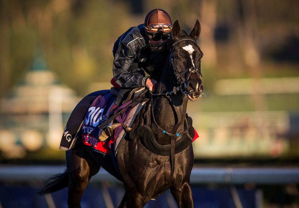 The Fugue trained by John Gosdon, trains for the Breeders' Cup Turf at Santa Anita Park in Arcadia, California on October 31, 2013. (Alex Evers/ Eclipse Sportswire)