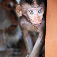 A very cute baby monkey in Polaki Temple, Bali, Indonesia.