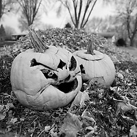 Pumpkins disguarded after Halloween has passed in Madison, Wisconsin.