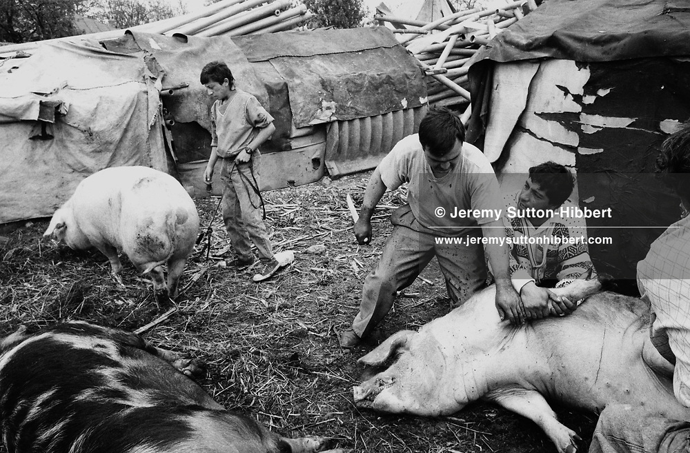 Romanian Orthodox Easter celebrations are the most important of the year for the Kalderash Roma of Sintesti camp, near Bucharest. Many pigs get slaughtered to provide food for the festivities..
