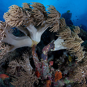 Healthy reef systems grow continuously, as illustrated here, with new coral growth atop old coral formations. Robust old-growth coral formations like this are common in areas without much human activity, such as the Eastern Fields of Papua New Guinea.