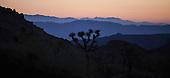 Joshua Tree & Grand Canyon