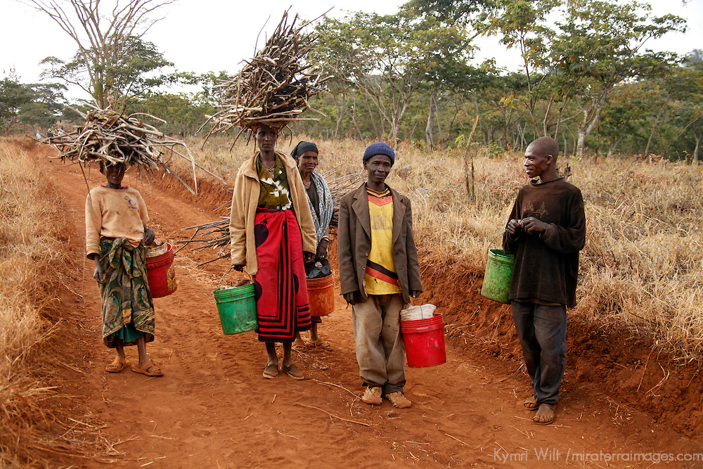 Africa, Tanzania, Karatu. Coffee pickers at  the Shangri-La Estate near Ngorongoro.