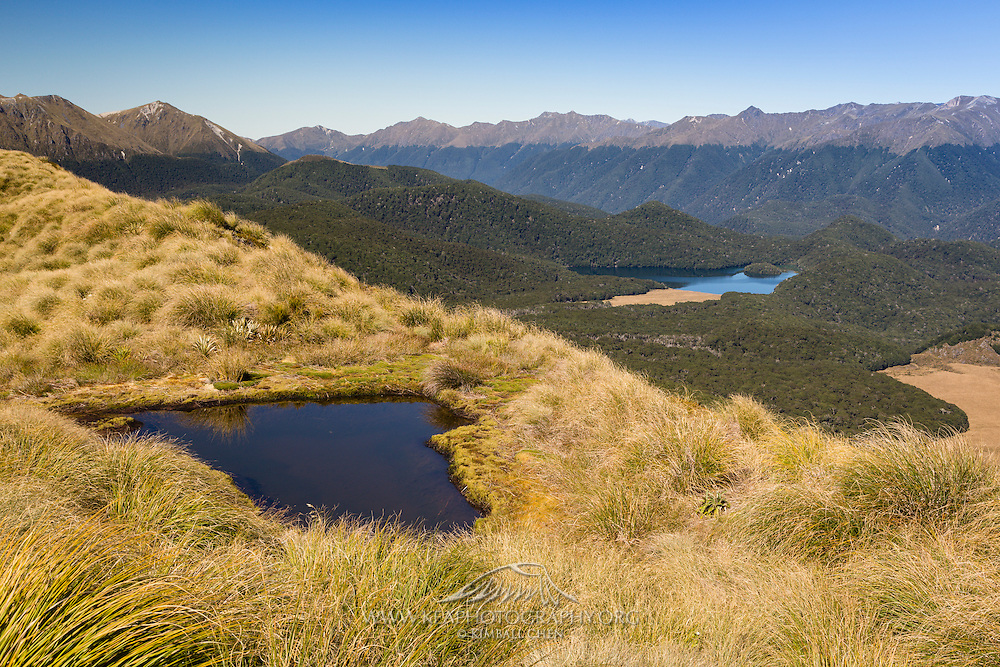 Astounding views on the hike up to Mount Burns, of tarns and lakes and tussock and forest, Fiordland.