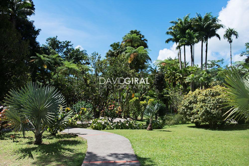 jardin de balata botanical garden fort de martinique david giral photography