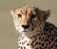Safari in Tanzania - selected pictures