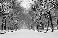 Central Park, New York City, New York, Manhattan, Poets Alley, Snow, Black and White
