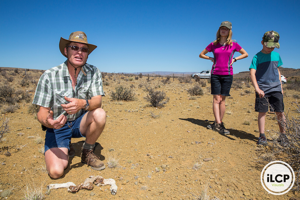 Andr&eacute; Theron shows the rest of one of its lambs.<br /> Western Cape, Karoo, South Africa / Andr&eacute; Theron montre les reste de l&rsquo;un de ses agneaux. <br /> Western Cape, Karoo, South Africa