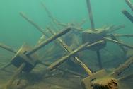 Fish Attractors<br /> <br /> Engbretson Underwater Photography