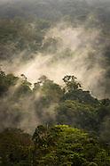 Biodiversity in the Wilderness of Costa Rica