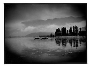 Women collecting lake grass to feed livestock in the early morning, Dal Lake, Srinagar, Indian Administered Kashmir.