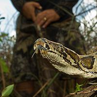 Editorial: Everglade Python Hunter