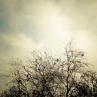 Arbol con Volantines en el Parque O´higgins. Madrugada de la celebración del Bicentenario de la República. Santiago de Chile, 20-09-10 (©Alvaro de la Fuente/TRIPLE.cl)