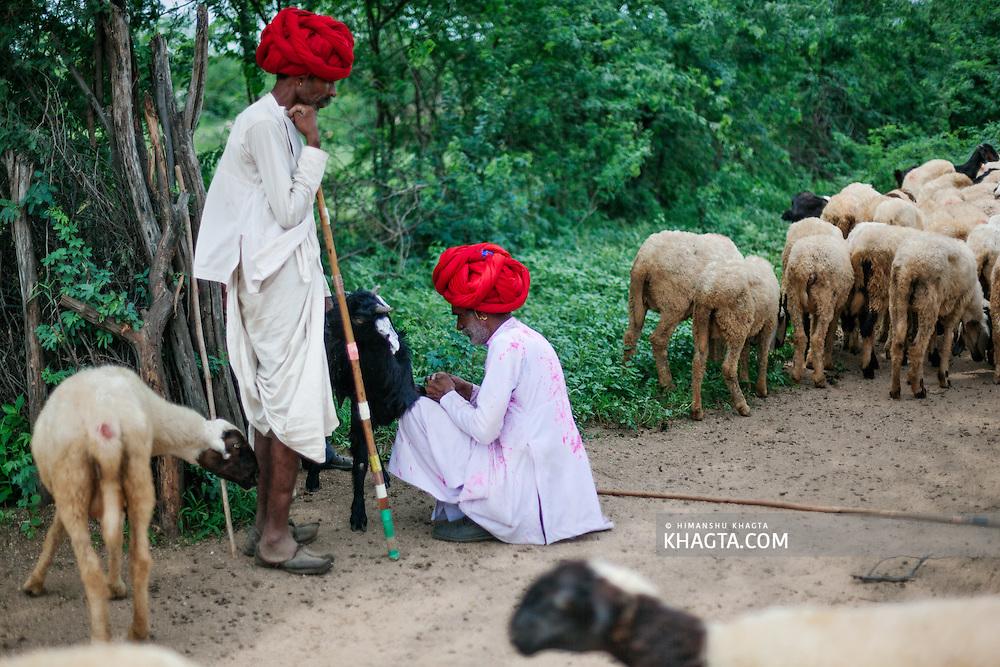 Rayka or Rabari Tribe of India