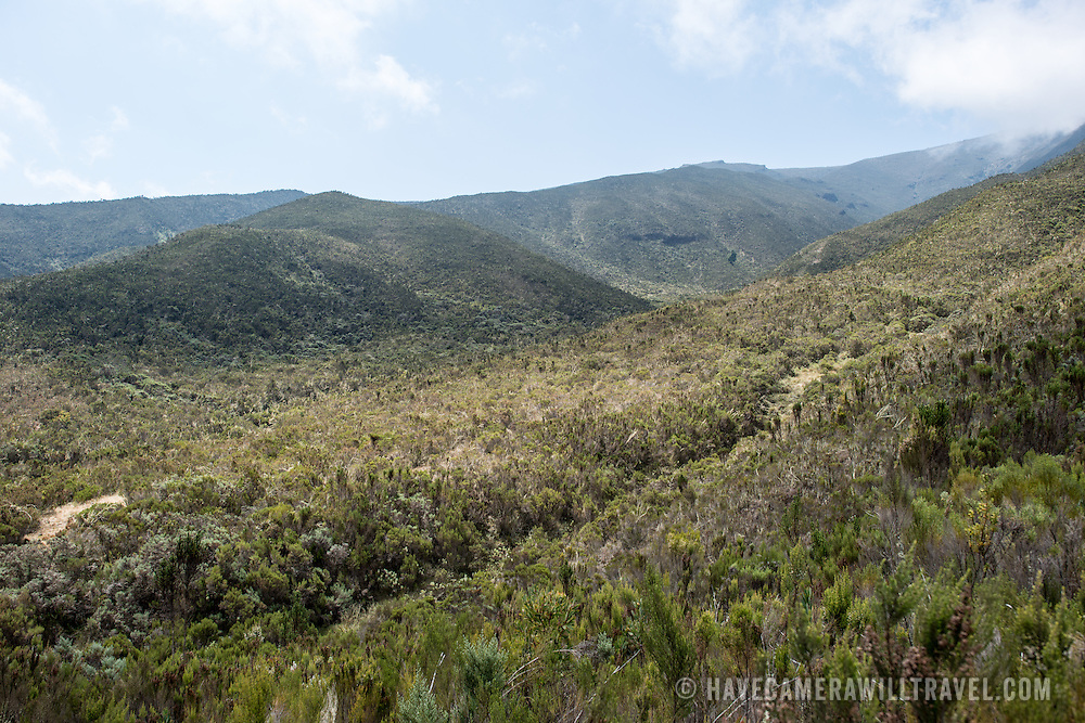 The landscape of the heath zone on Mt Kilimanjaro's Lemosho Trail.